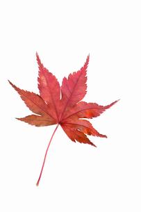 fallen_leaves_079の写真素材 [FYI00446461]