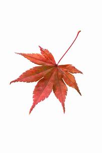 fallen_leaves_080の写真素材 [FYI00446462]