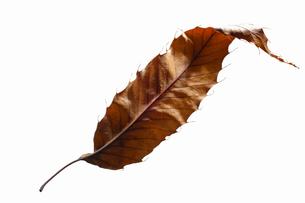 fallen_leaves_039の写真素材 [FYI00446463]