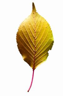 fallen_leaves_026の写真素材 [FYI00446464]
