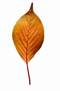 fallen_leaves_027の写真素材 [FYI00446465]