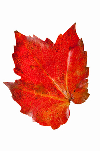 fallen_leaves_045の写真素材 [FYI00446467]
