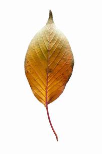 fallen_leaves_025の写真素材 [FYI00446468]