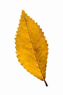 fallen_leaves_092の写真素材 [FYI00446469]