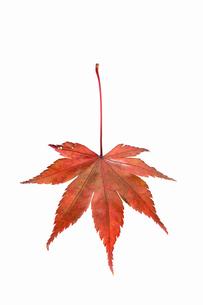 fallen_leaves_081の写真素材 [FYI00446471]