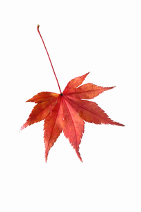 fallen_leaves_085の写真素材 [FYI00446472]