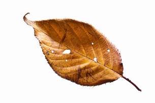 fallen_leaves_032の写真素材 [FYI00446473]