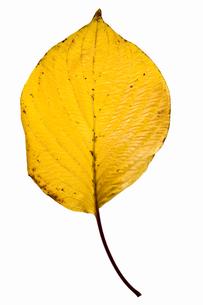 fallen_leaves_104の写真素材 [FYI00446474]
