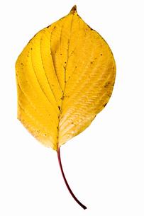 fallen_leaves_105の写真素材 [FYI00446475]