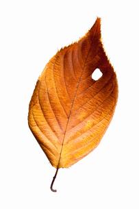 fallen_leaves_034の写真素材 [FYI00446476]
