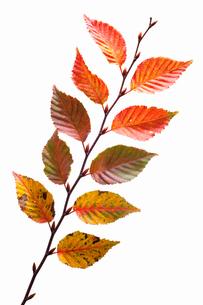 fallen_leaves_149の写真素材 [FYI00446477]