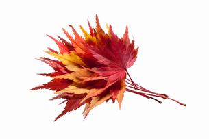 fallen_leaves_117の写真素材 [FYI00446478]