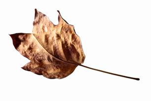 fallen_leaves_057の写真素材 [FYI00446479]