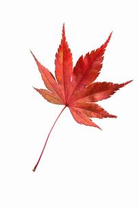 fallen_leaves_078の写真素材 [FYI00446480]