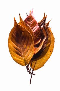 fallen_leaves_109の写真素材 [FYI00446481]