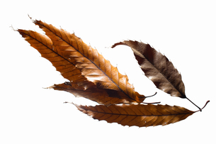 fallen_leaves_107の写真素材 [FYI00446482]
