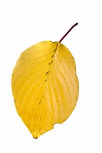 fallen_leaves_106の写真素材 [FYI00446483]