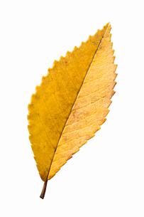 fallen_leaves_093の写真素材 [FYI00446484]