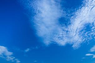 background[autumn_sky]_075の写真素材 [FYI00446890]