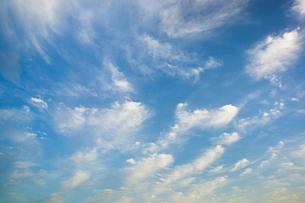 background[cirrostratus_sky]_053の写真素材 [FYI00446899]