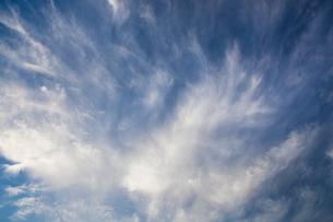 background[cirrostratus_sky]_044の写真素材 [FYI00446900]