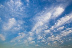 background[cirrostratus_sky]_036の写真素材 [FYI00446901]