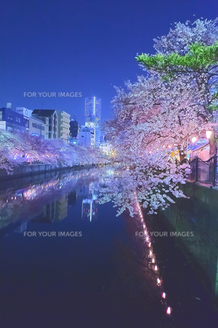 cherry_blossoms_night[Oooka_River]_54の素材 [FYI00447408]