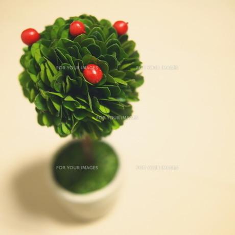 観葉植物の写真素材 [FYI00447587]