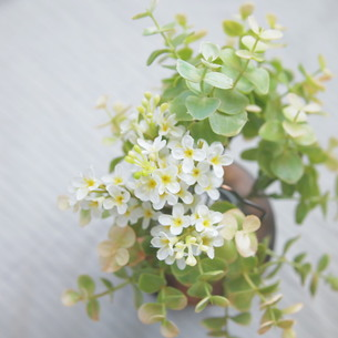 花を飾ろうの写真素材 [FYI00447631]