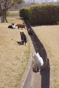 猫たちの写真素材 [FYI00447662]