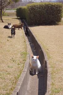 側溝の猫の写真素材 [FYI00447668]