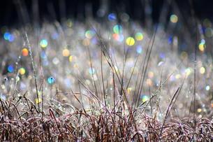 朝日を浴びる霜の写真素材 [FYI00448263]