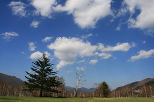 草原と青空の写真素材 [FYI00448307]