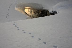 雪の足跡の写真素材 [FYI00448348]