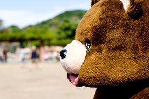 何か言いたげなクマの素材 [FYI00448383]
