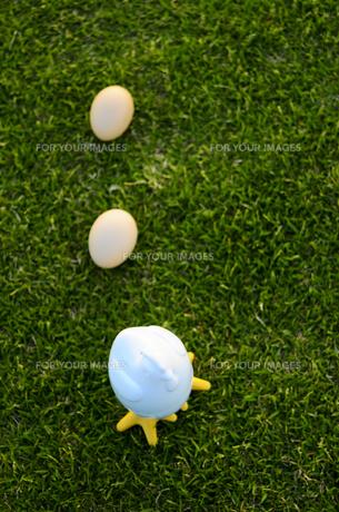 たまごを産むにわとりの写真素材 [FYI00448387]