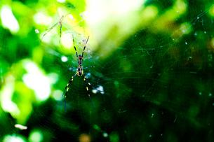 蜘蛛の巣の写真素材 [FYI00448416]