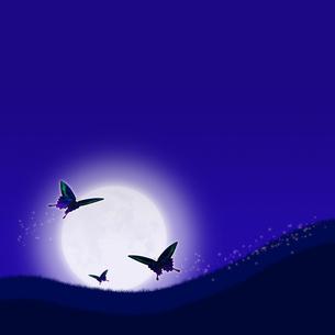 月夜を飛ぶ蝶の写真素材 [FYI00448490]