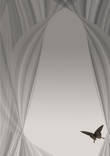 黒い蝶の写真素材 [FYI00448491]