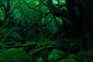 屋久島の自然風景の写真素材 [FYI00448543]