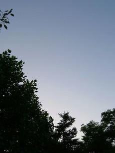 明け方の空と木の写真素材 [FYI00448544]