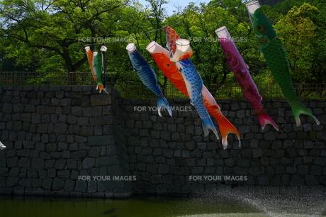 カラフルな鯉のぼりの写真素材 [FYI00448568]