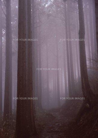 霧の素材 [FYI00448772]