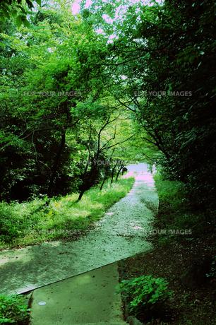 緑のトンネルの写真素材 [FYI00448836]