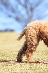 犬のしっぽの写真素材 [FYI00448877]