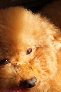 光を浴びる犬の写真素材 [FYI00448899]
