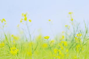 春の調べの写真素材 [FYI00449129]