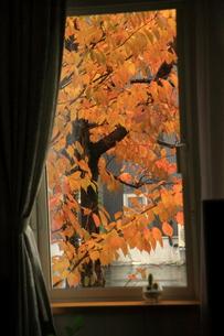 窓が名画との写真素材 [FYI00449198]
