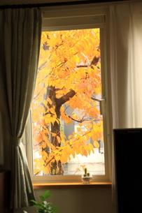 窓が名画との写真素材 [FYI00449208]
