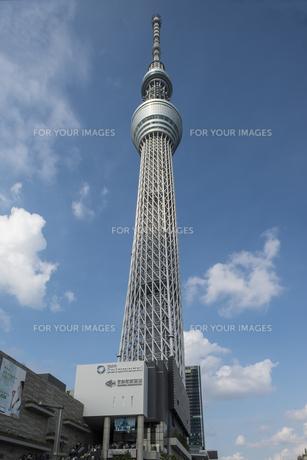 業平橋から見上げた東京スカイツリーの写真素材 [FYI00449229]